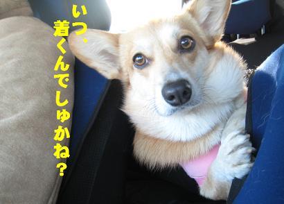 伊豆1.JPG