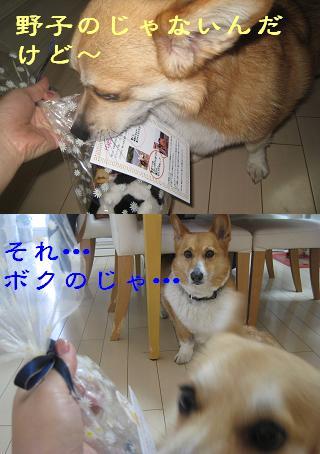 コニーちゃんより.JPG