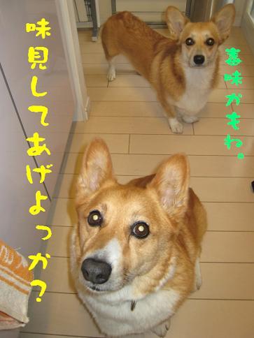 シュークリーム4.JPG