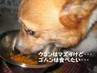 マズイ1.JPG