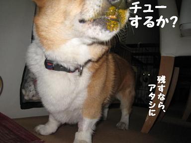 マズイ8.JPG