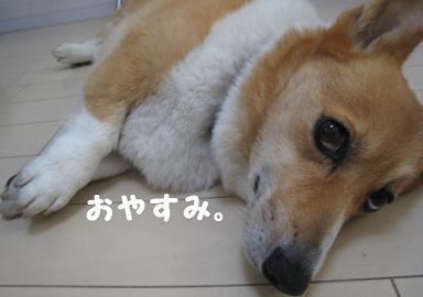 寝る11.JPG